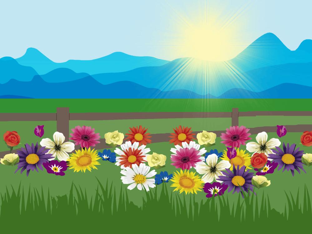 Flower,Sky,Field
