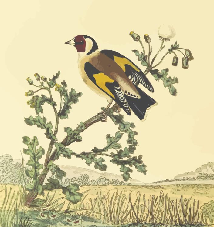 Perching Bird,Eurasian Golden Oriole,Hornbill
