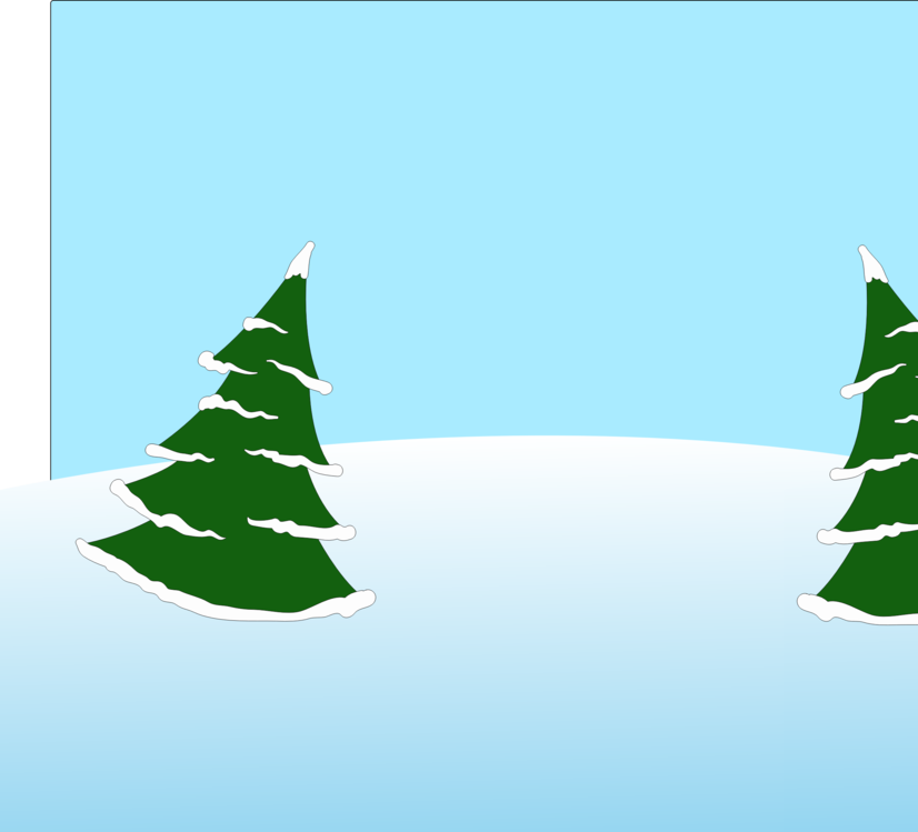 Evergreen,Fir,Colorado Spruce