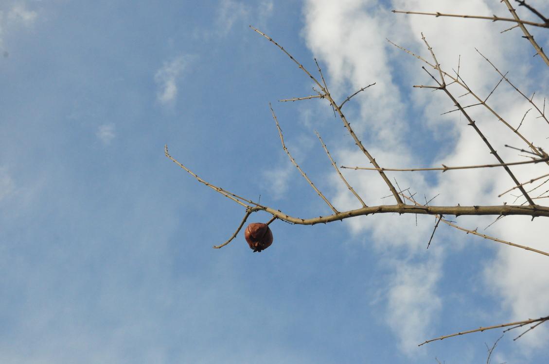 Tree,Plant,Twig