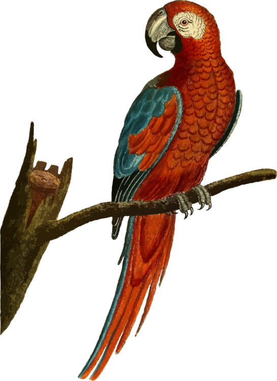 Macaw,Parrot,Budgie
