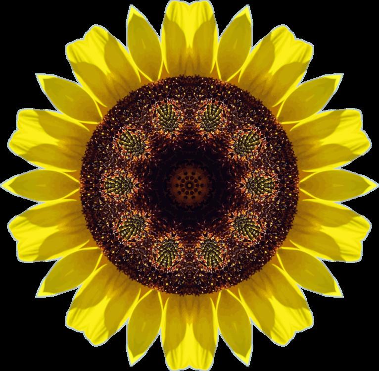 Pollen,Sunflower Seed,Plant