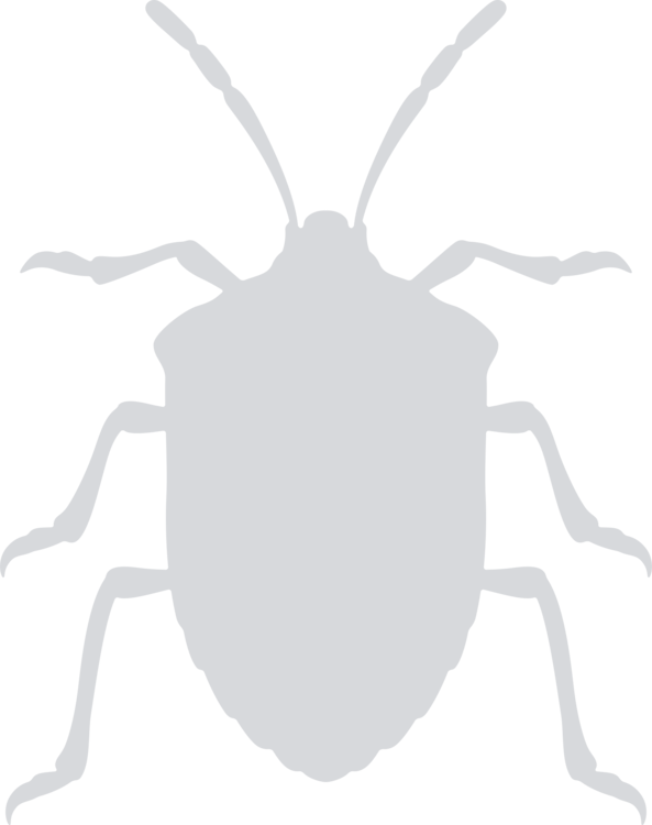 Symmetry,Sticker,Weevil