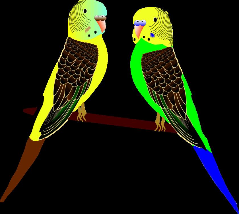 Parrot,Budgie,Lorikeet