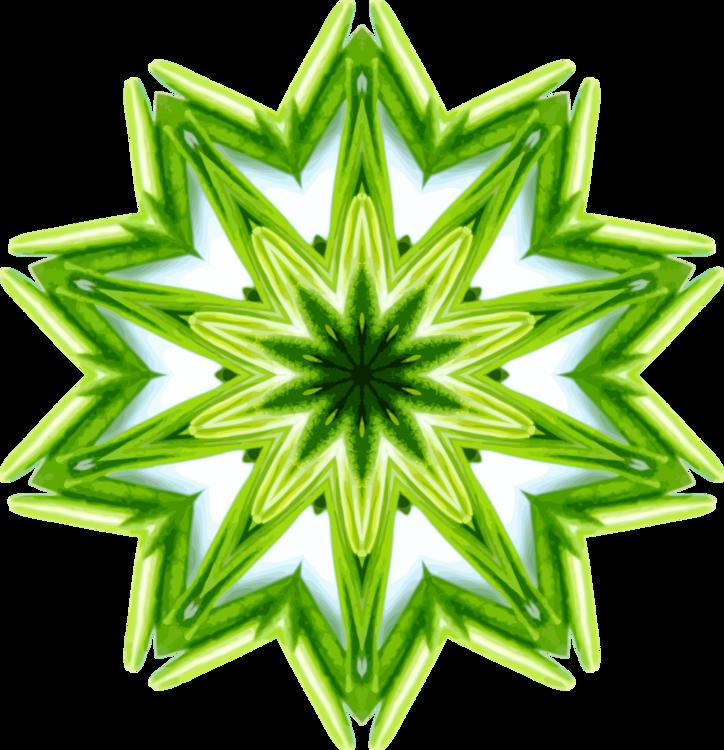 Plant,Green,Symmetry