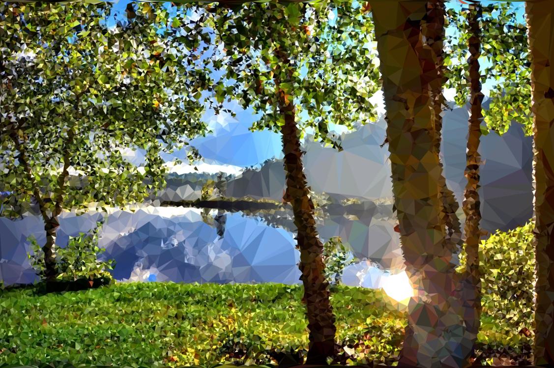 Biome,Woodland,Sunlight