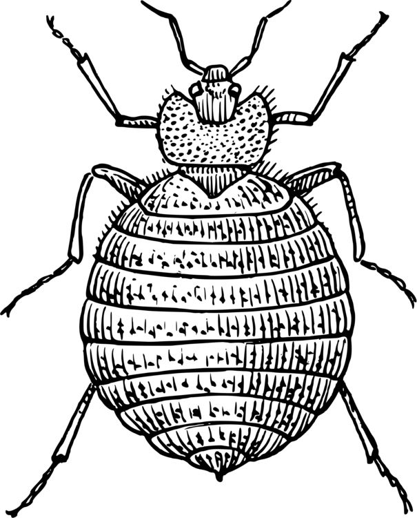 Line Art,Symmetry,Darkling Beetles