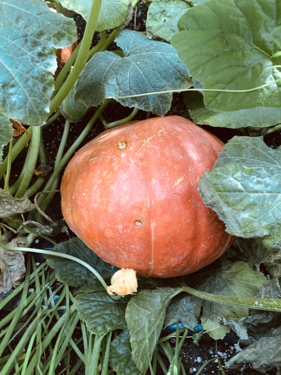 Plant,Vegetarian Food,Food