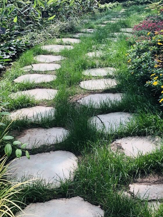 Plant Community,Botany,Grass Family