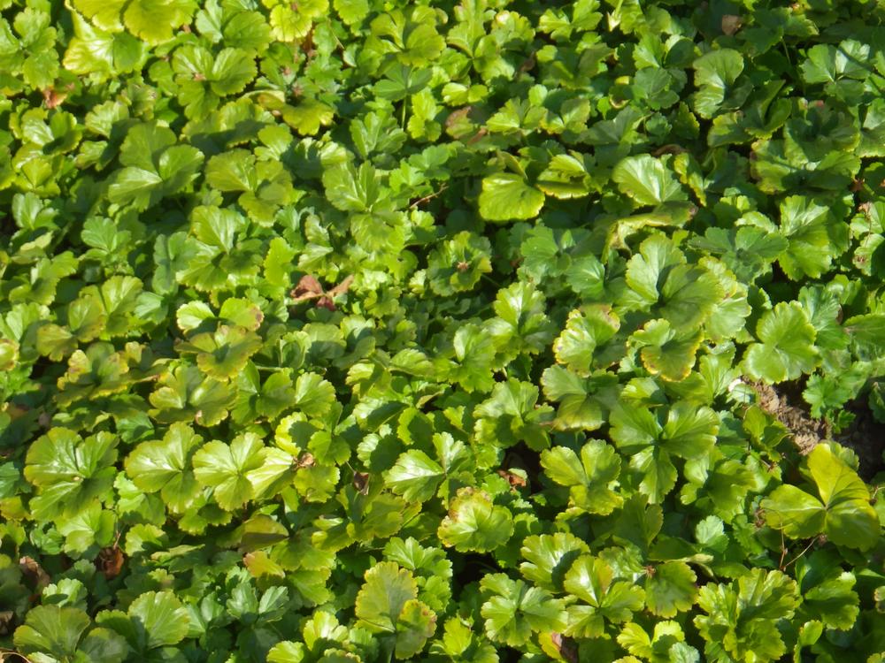 Evergreen,Plant,Flower