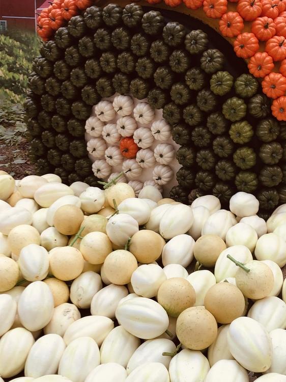 Cuisine,Plant,Vegan Nutrition