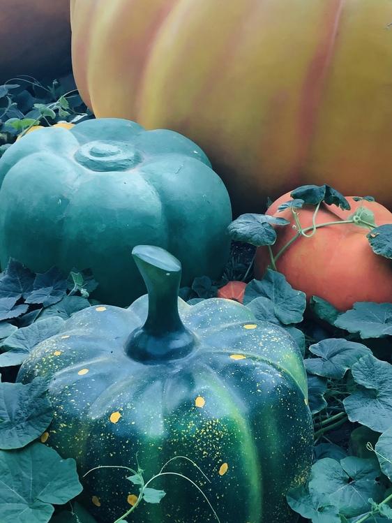 Plant,Calabaza,Fruit