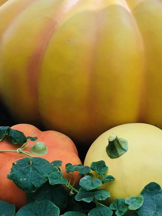 Plant,Vegetarian Food,Vegan Nutrition