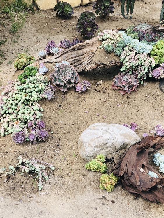 Plant,Flower,Soil