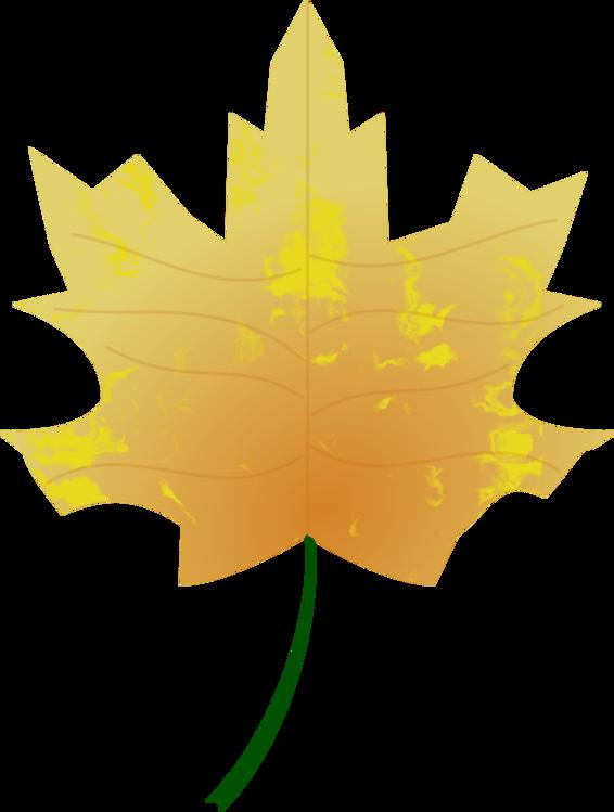 Plant,Leaf,Black Maple