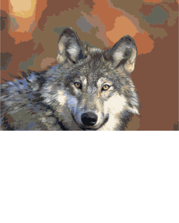 Canis Lupus Tundrarum,Coyote,Wildlife