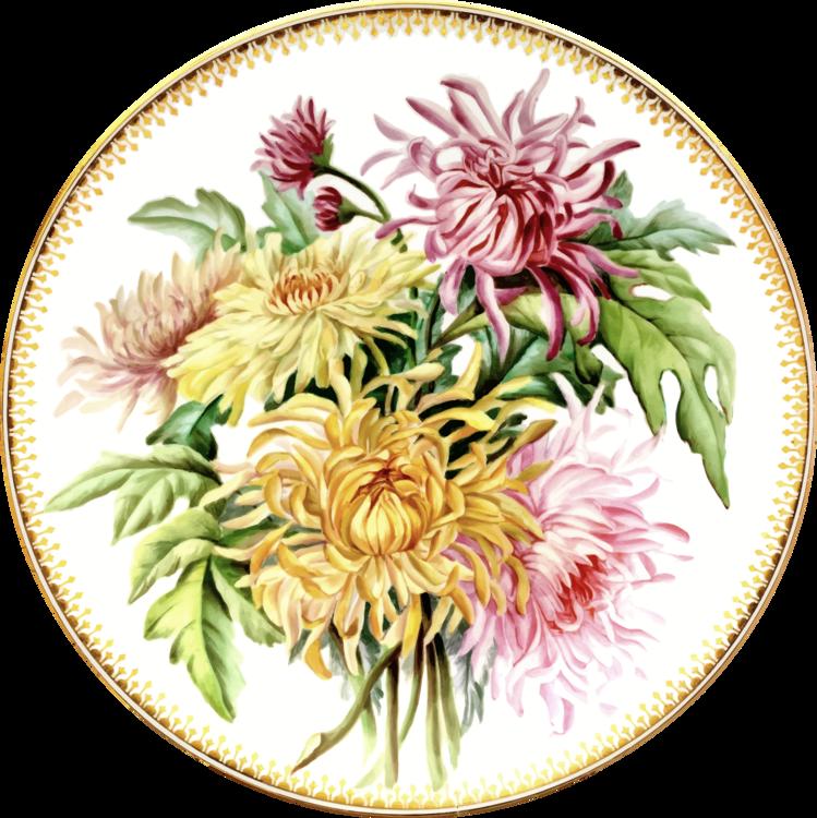 Chrysanths,Plant,Flower