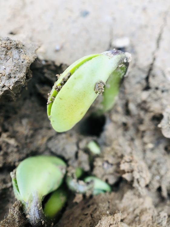 Soil,Plant,Organism