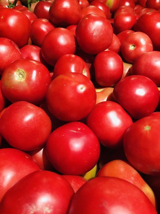 Tomato,Solanum,Bush Tomato
