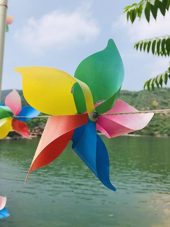 Wheel,Windmill,Plant