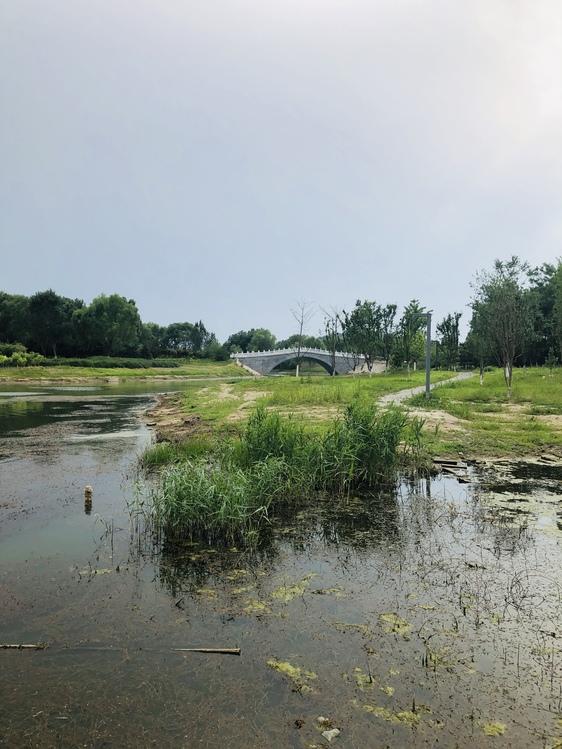Salt Marsh,Fen,Fluvial Landforms Of Streams