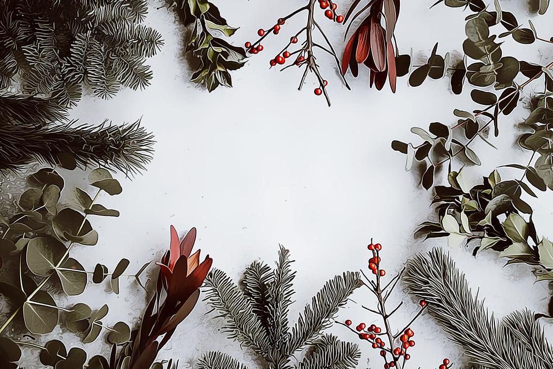 Evergreen,Botany,Plant