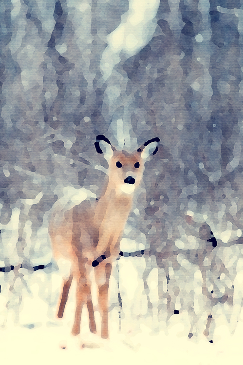 Fawn,Wildlife,Art