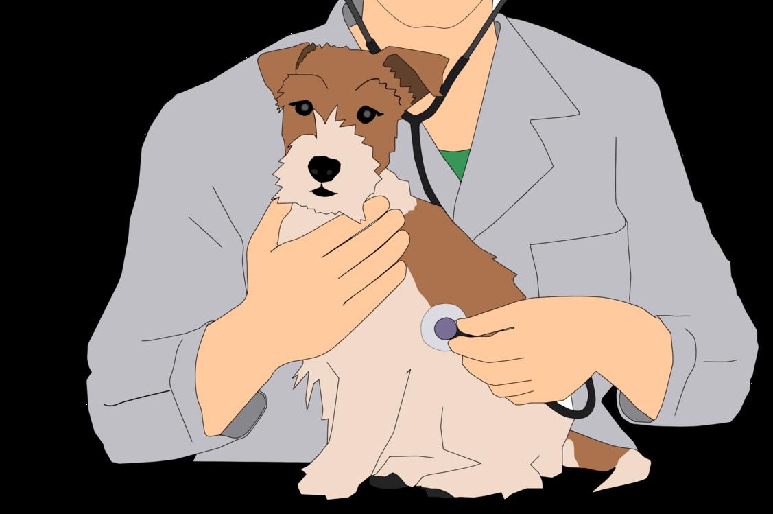 Companion Dog,Carnivore,Fox Terrier