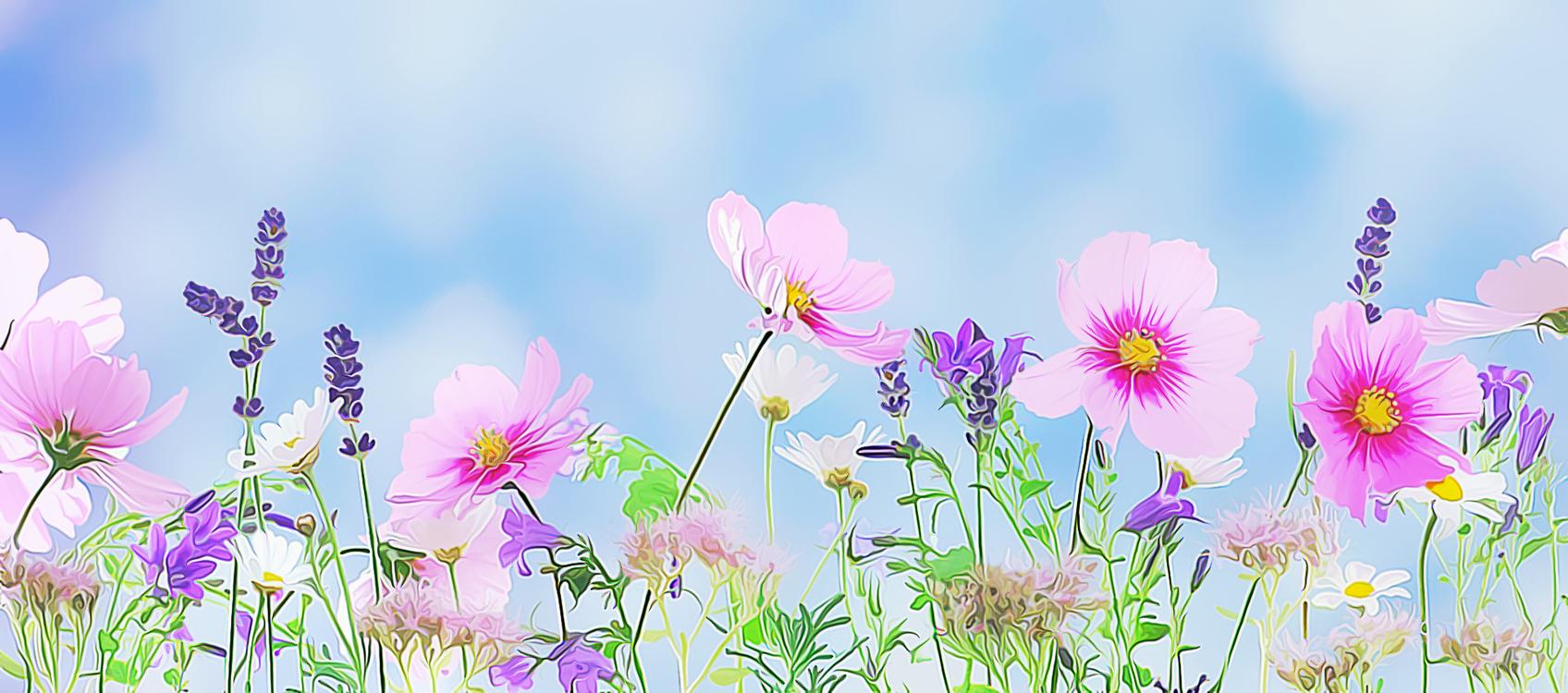 Pink,Botany,Plant