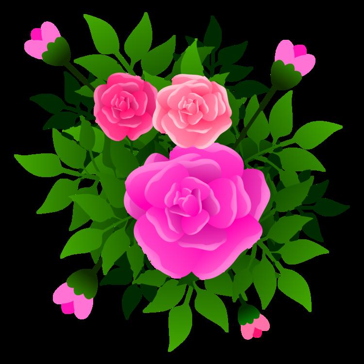 Pink,Flower,Prickly Rose