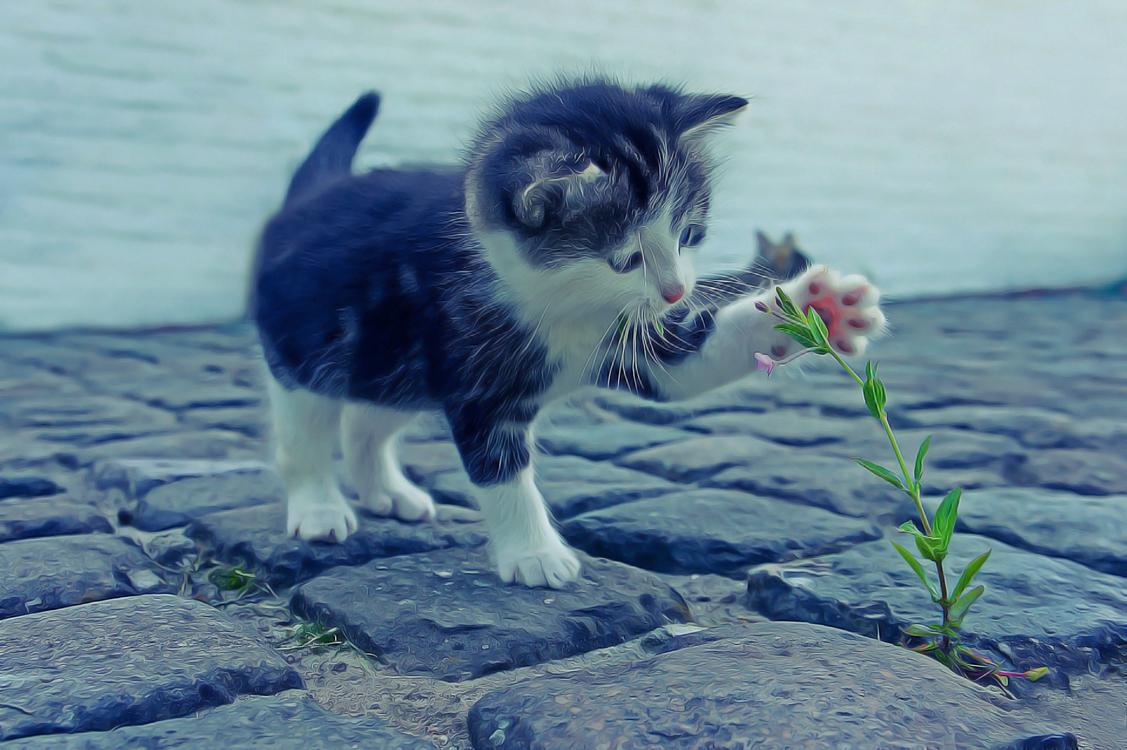 Carnivore,Norwegian Forest Cat,Aegean Cat