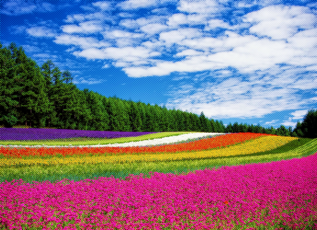 Summer,Plant,Flower