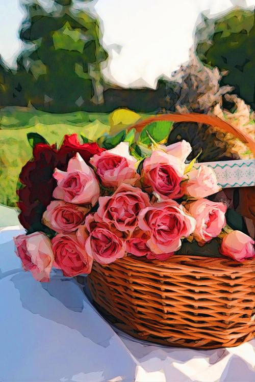 Pink,Rose Order,Plant
