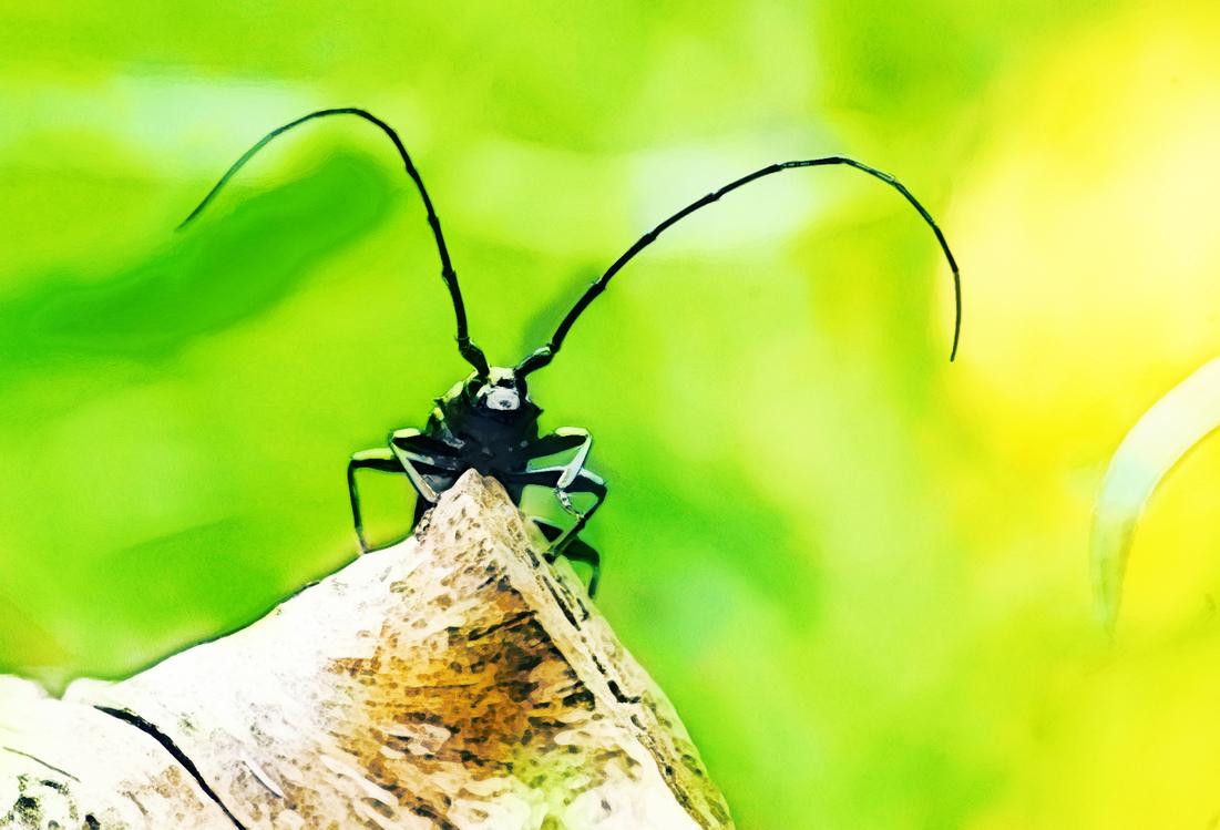 Butterfly,Arthropod,Stock Photography