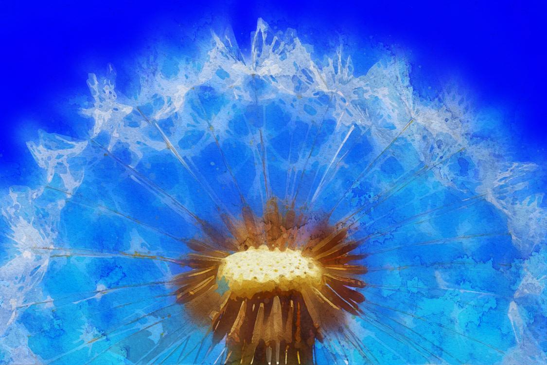 Blue,Pollen,Electric Blue
