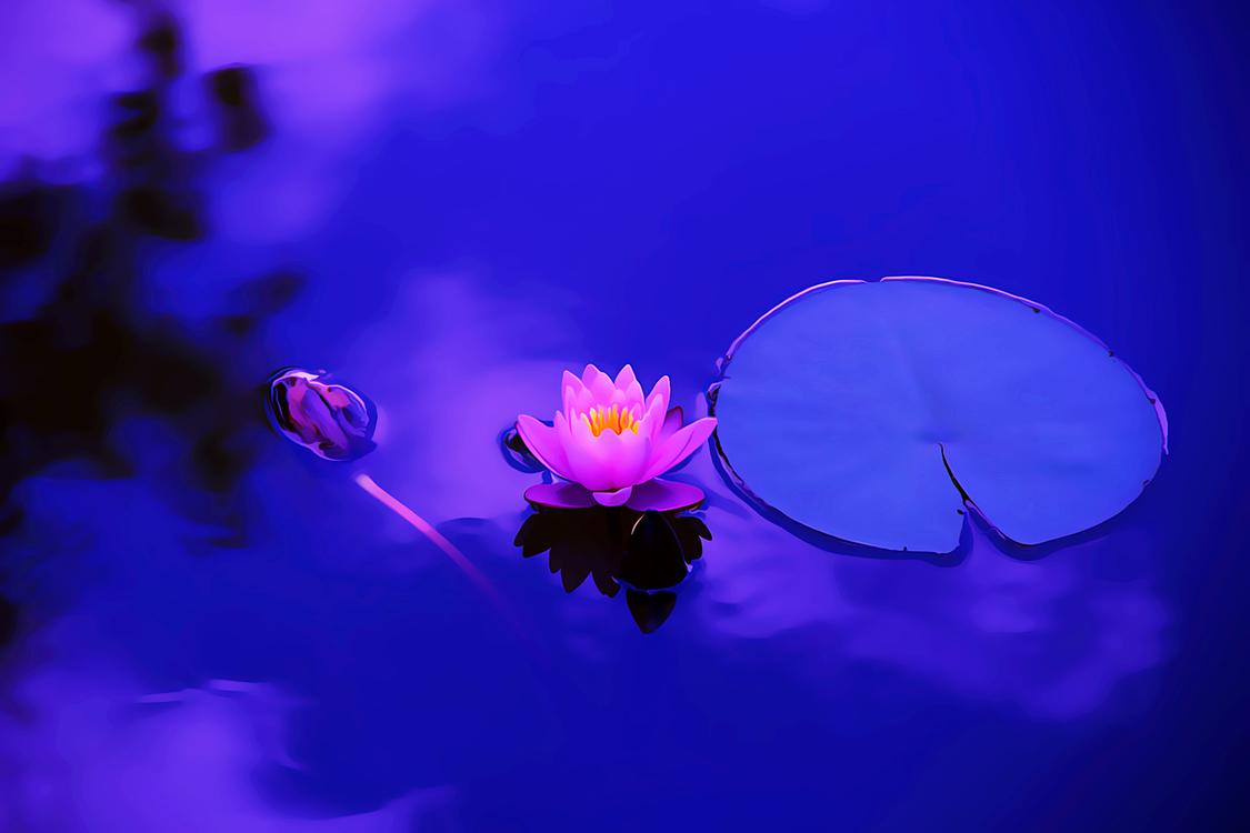 Blue,Plant,Flower