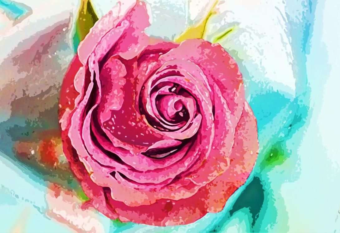 Pink,Flower,Rose