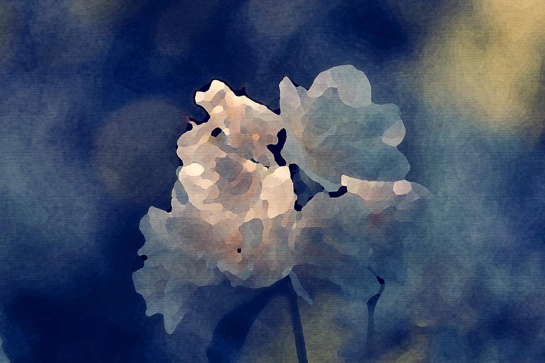 Blue,Flower,Space