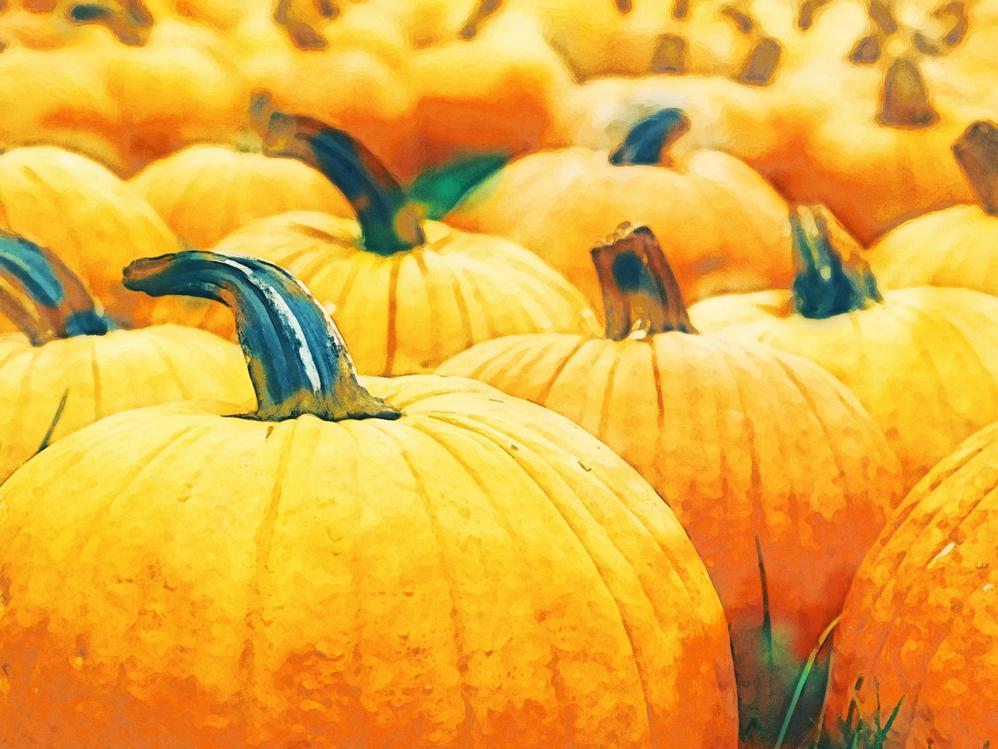 Leaf,Gourd,Local Food
