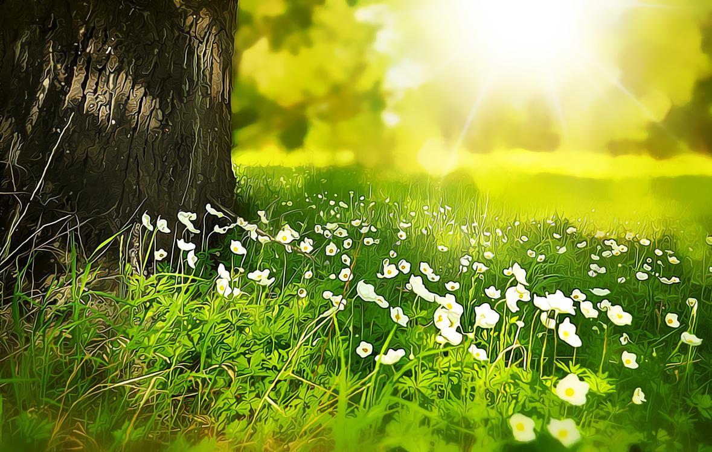 Flower,Leaf,Sunlight