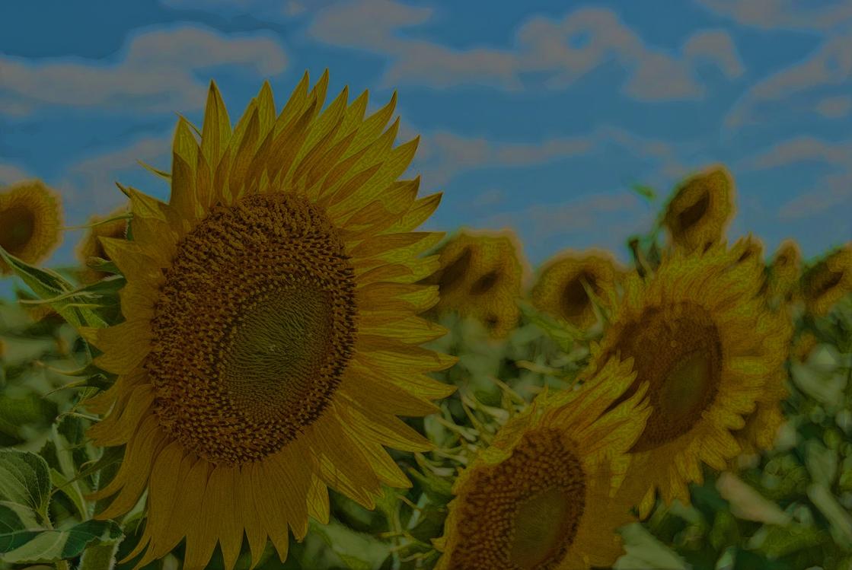 Pollen,Cuisine,Plant