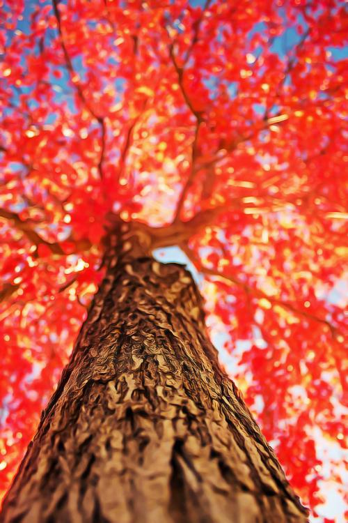 Autumn,Plant,Leaf