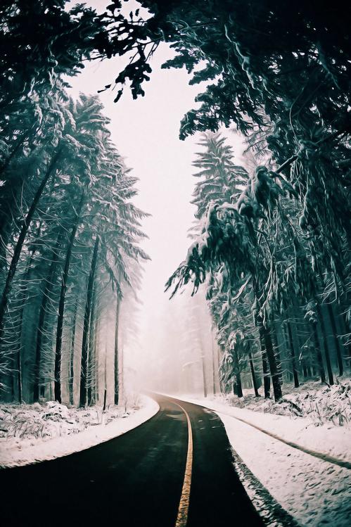 Leaf,Winter,Sky