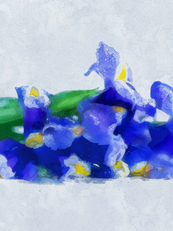 Blue,Iris,Plant
