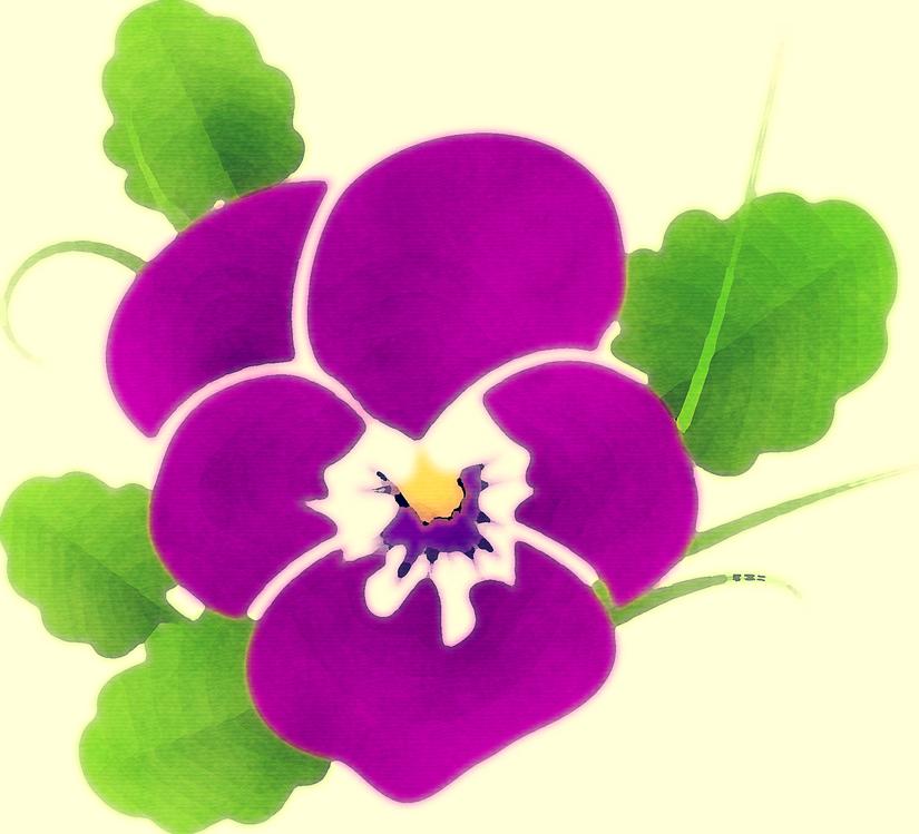 Plant,Flower,Perennial Plant