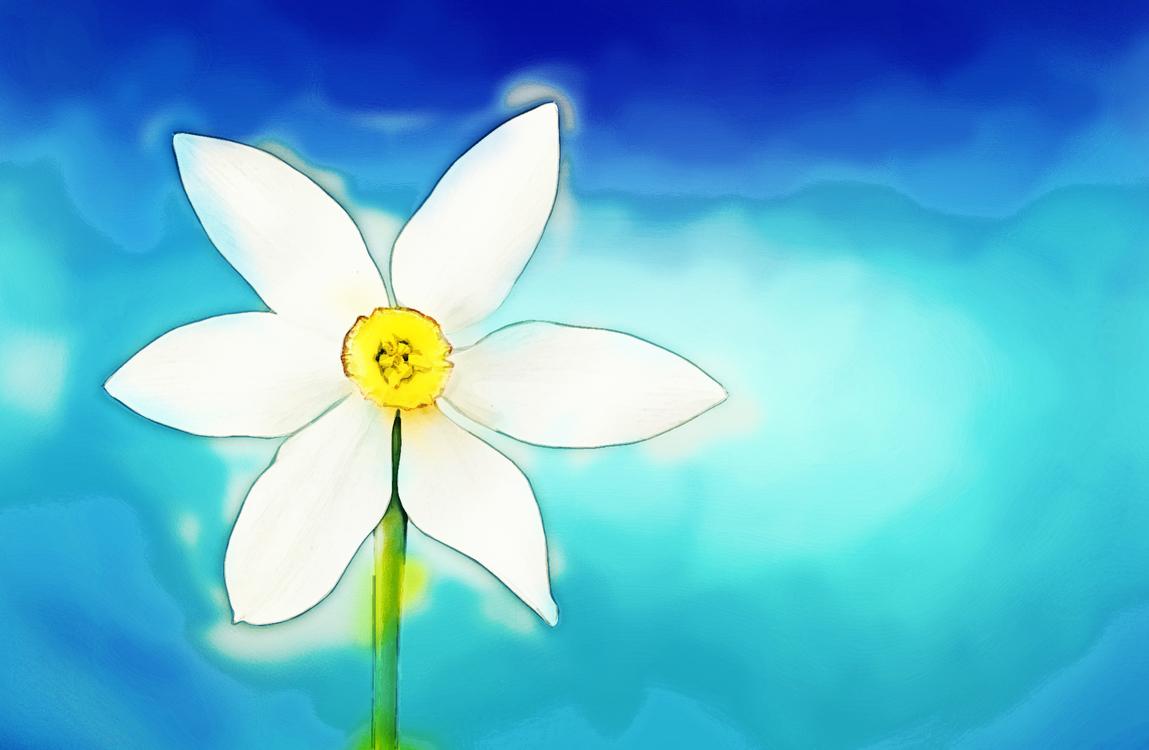 Wheel,Plant,Flower