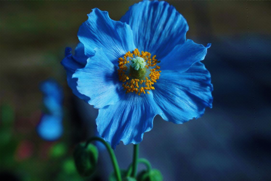 Blue,Pollen,Plant