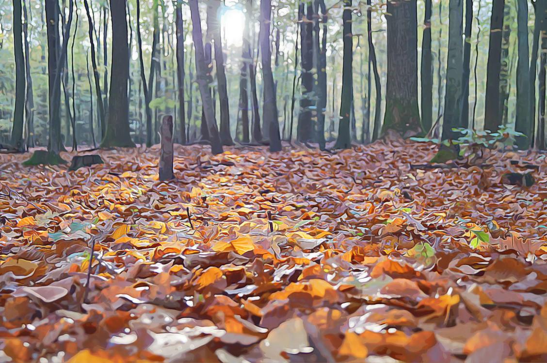 Biome,Leaf,Oldgrowth Forest