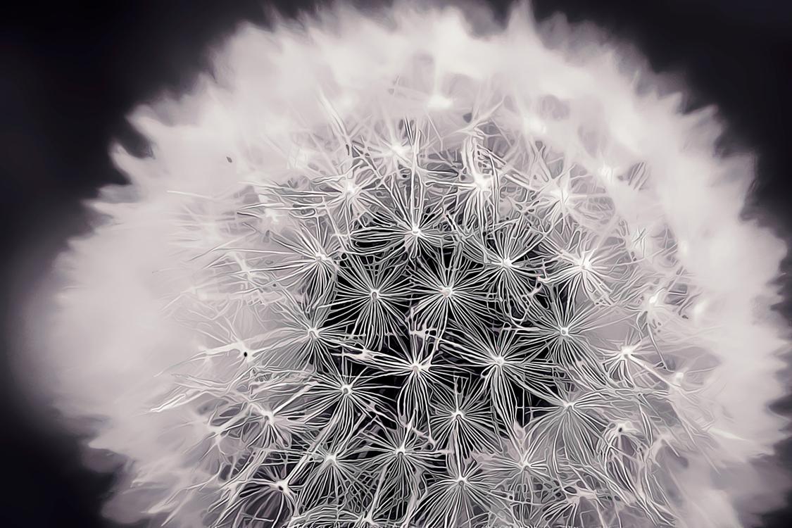 Stock Photography,Flower,Sky