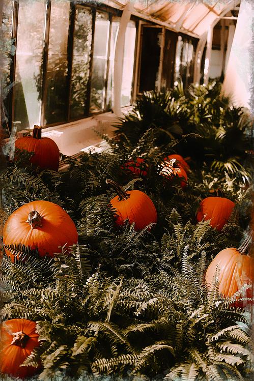 Pumpkin,Winter Squash,Gourd